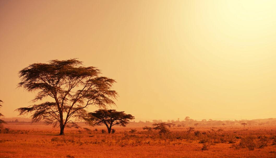 Kan tørke og andre klimaendringer ha drevet folk ut av Afrika? Dette er en tørr slette i Namibia. (Illustrasjonsfoto: Shutterstock/NTB Scanpix)