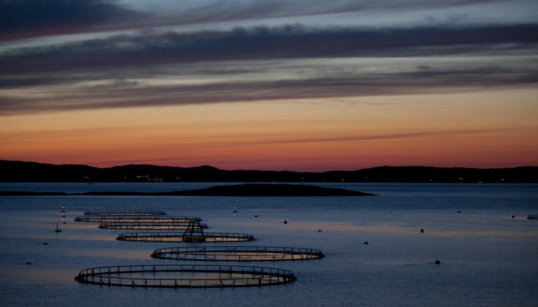 I sjøen opplever vi nå en sterk økning i oppdrettsnæringen. Dette øker behovet for koordinering mellom kommunene, skriver forskere fra HiOA i denne kronikken. (Foto: Jonas Frøland / NTB scanpix)