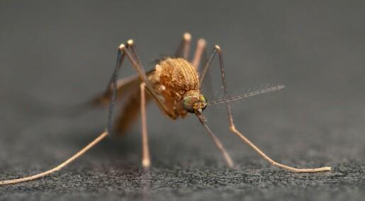 Fang og send mygg til forskere i Trondheim