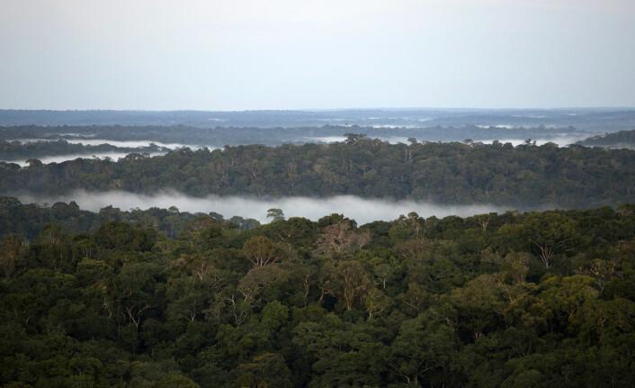 Amazonas har fortsatt tett skog, men om få år kan det bli langt mindre av den. (Foto: Bruno Kelly/Reuters)
