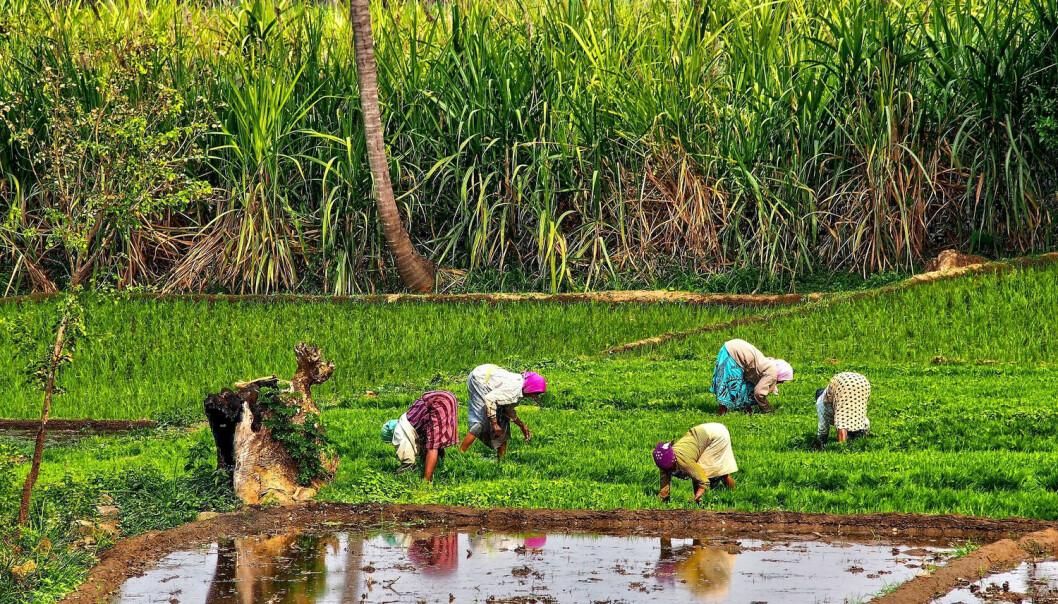 India topper listen over land i verden med høyest andel av ekstremt fattige, på tross av sine mange prestasjoner. (Foto: Shutterstock / NTB scanpix)