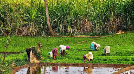 Hvorfor klarer ikke rike India å bekjempe kronisk underernæring?