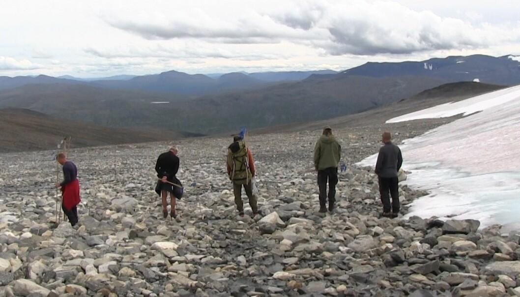 Den eldste isen i denne fonna kan være fra steinalderen. Nå smelter isen, og arkeologene har en gyllen mulighet til å finne gamle spor etter mennesker. (Foto: Lasse Biørnstad, forskning.no)