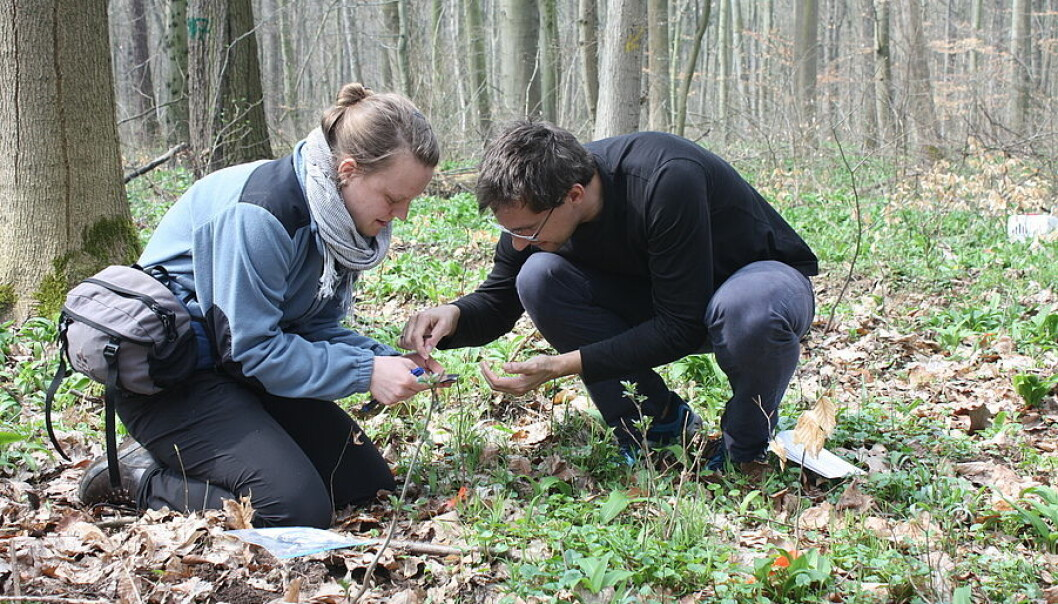 Forskerne samler småtrær til analyse.  (Foto: Bettina Ohse/UL/iDiv)