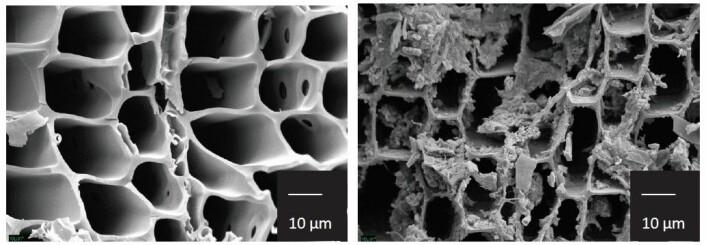 Til venstre ser vi ferskt trekull fra furu i 1500 X forstørrelse. Furuvedens naturlige anatomi tilbyr hulrom som fungerer som flotte leiligheter for mikroorganismer i skogjorden. Til høyre ser du trekull som har ligget i skogjorden i 2000 år og her er leilighetene bebodd. (Foto: Elin Ørmen / NMBU)
