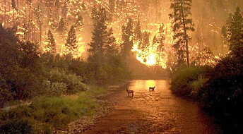 Kronikk: Skogbrannens ukjente sider