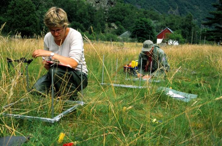 Inger Auestad og Knut Rydgren ved Høgskulen i Sogn og Fjordane registrerer artar i Lærdal. Høy og frø til forsøket vart henta mellom anna frå denne beitemarka. (Foto: Idun Husabø)
