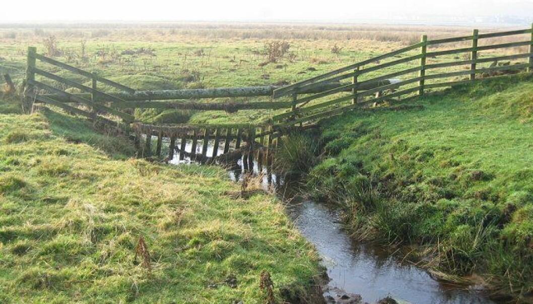 I ett år har forskere målt oksygenkonsentrasjon og karbonholdig materiale i to bekker i Nordøst-Skottland, blant annet her i Cairn Burn. Funnene bekrefter at bekker har en viktig rolle i den globale karbonsyklusen. (Illustrasjonsbilde: Richard Webb / Cairn Burn / CC BY-SA 2.0)