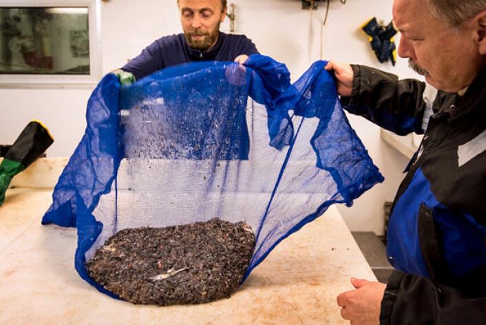 Havforskerne Lars-Johan Naustvoll og Tor Knutsen tar hånd om planktonet som er tatt med trål. (Foto: Elvar H. Hallfredsson, Havforskningsinstituttet)