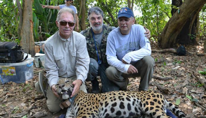 Isbjørnforskeren Øystein Wiig reiste i 2014 til Pantanal sørvest i Brasil for å lære å fange jaguarer av ekspertene, Tarcizio Paula og Ronaldo Morato. (Foto: Øystein Wiig)