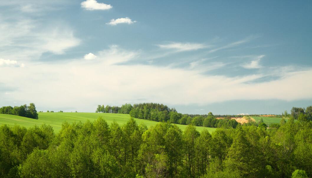 Kan planter tilpasse seg globale klimaendringer? Skreidzeleu / Shutterstock / NTB scanpix