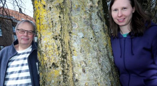 Lavforsker om regnskogen: – Vi vet ingenting om mangfoldet