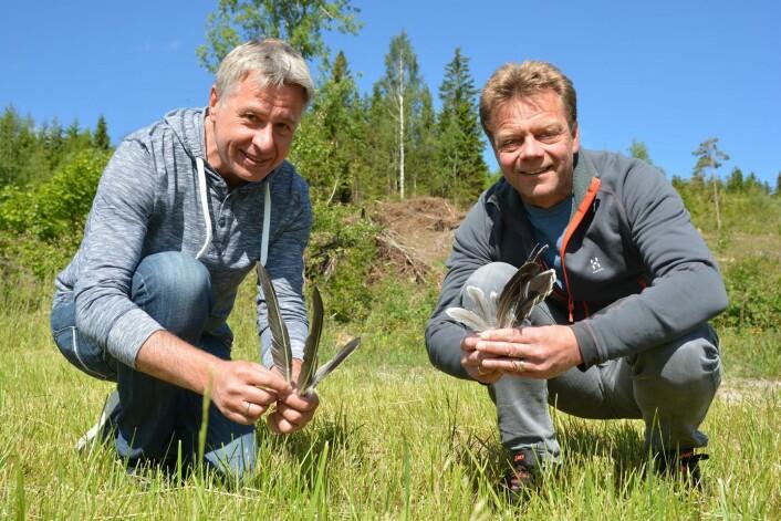 Rolf Terje Kroglund og Jan Eivind Østnes bruker fjær fra sædgås til å bestemme gåsas DNA. (Foto: Bjørnar Olav Leknes)