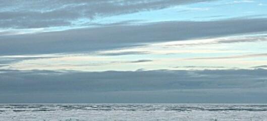 Vi leter etter grønlandssel ved iskanten