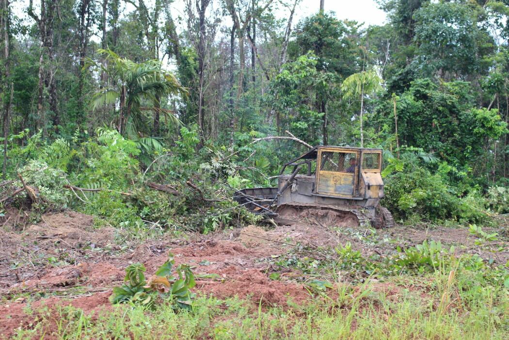 Kvegdrift i Amazonas er lite produktivt og krever enorme områder. (Foto: Elise Kjørstad)