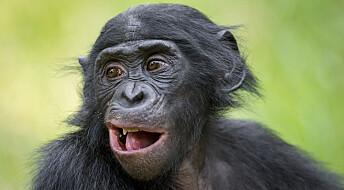 Apemødre hjelper sønnene med å få sexpartnere