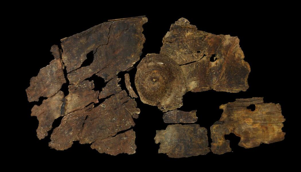 Så gamle gjenstander av organisk materiale som tre overlever sjelden, men fordi det har ligget i jord med akkurat den riktige fuktigheten har dette skjoldet klart seg. Her ser du skjoldet etter at arkeologene har brukt lang tid på å rengjøre det. (Foto: Mike Bamforth, ULAS)