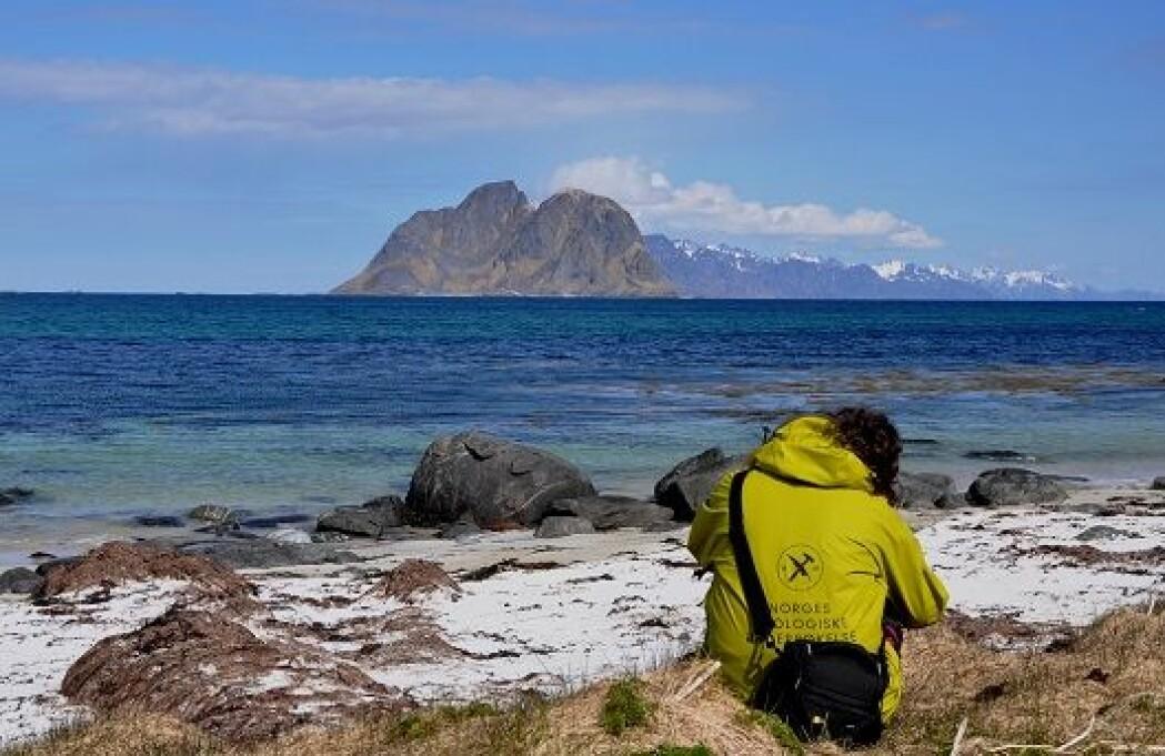 I Lofoten er det mange vakre sandstrender og strandflater. Nå har forskere funnet en sammenheng mellom disse strendene – og at det er lite olje og gass å finne i havet utenfor. Bildet er tatt fra øya Værøy og du ser den velkjente Lofoten-veggen innover. (Foto: Morten Smelror/NGU foto)