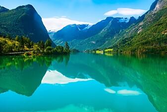 Derfor blir fjorden grøn