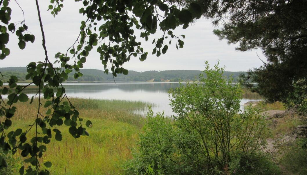 Ett av målene til BIOWATER er å undersøke hvilke effekter endret jord- og skogbrukspraksis kan ha for vannkvalitet og vannbalansen i ferskvannsystemene våre. (Foto: Eva Skarbøvik).