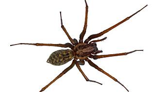 Slik blir edderkoppskrekken mindre