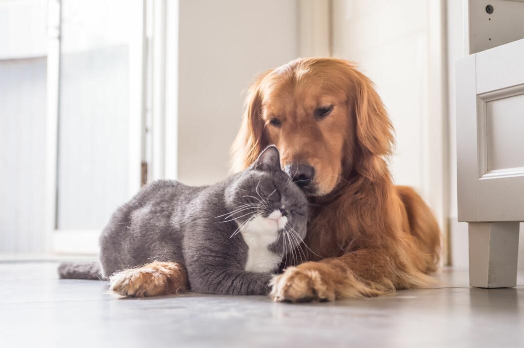 Er hunden og katten naturlig erkefiender? Ifølge atferdsforsker Björn Forkman er svaret nei. (Foto: Chendongshan / Shutterstock / NTB scanpix)