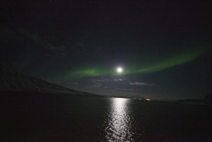 Selv lyset fra månen eller lyset fra skipet er nok til å påvirke dyrene som lever i polare farvann. (Foto: Geir Johnsen, NTNU, UNIS)