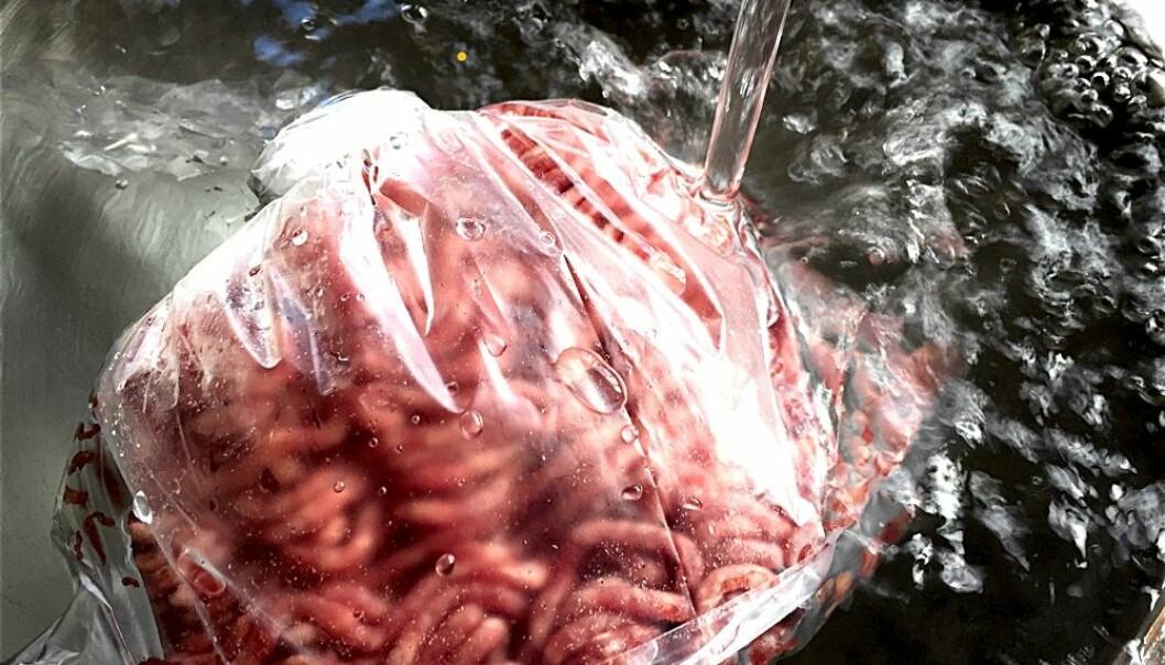 Legg en tett pose med kjøtt eller kjøttdeig i vasken eller i en bolle med vann, når du skal tine maten. Også grønnsaker bør tines raskt fra frossen tilstand. (Foto: Bård Amundsen)