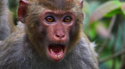 Aper i India fortsetter å drepe mennesker