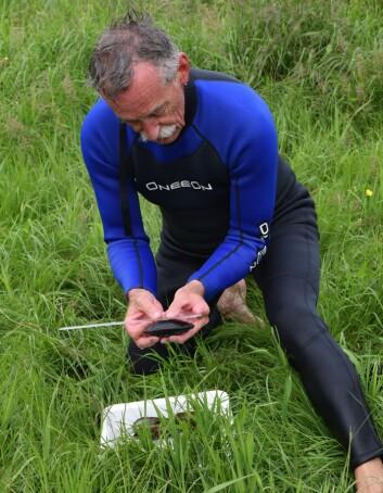 Inge Christ måler størrelsen på elvemuslingene før de settes ut igjen. (Foto: Elin Nyberg)