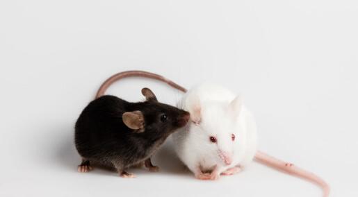 Tarmbakterier ga autisme-adferd hos mus