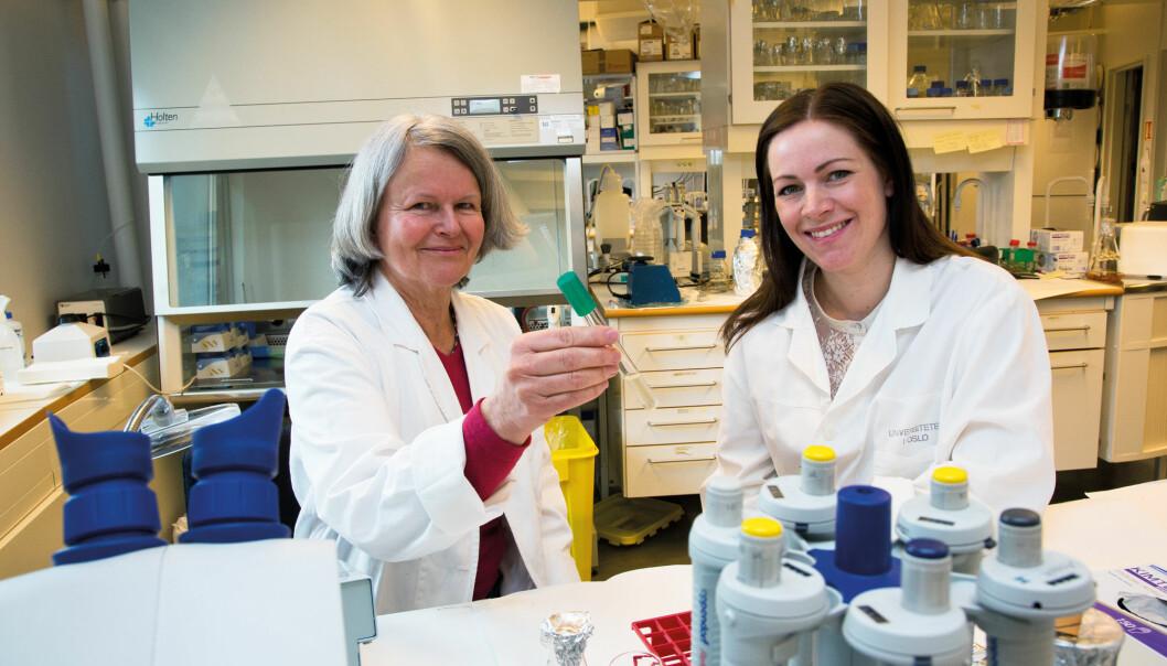 Anne Aamdal (t.v.) og Ingun Lund Witsø tester ut et nytt kjemisk fra UiO som skal hindre bakteriene i å samarbeideog danne biofilm. (Foto: Yngve Vogt)