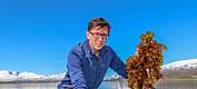 Skal forske på oppdrett av alger og kråkeboller