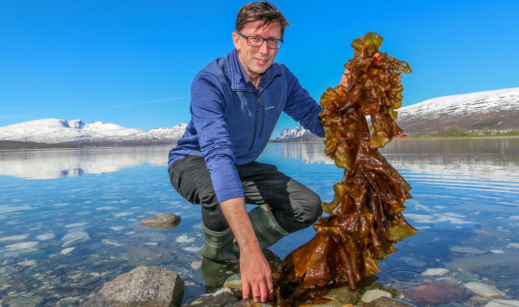 Philip James fra Nofima koordinerer et EU-finansiert forskningsprosjekt. Her holder han frem et eksempel på makroalger i Tromsø. (Foto: Emil Bremnes / Nofima)