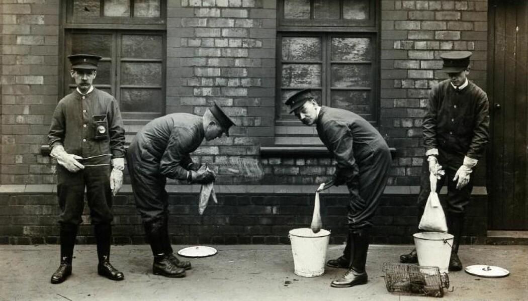 Da pesten kom til Liverpool i 1901, ansatte havnemyndighetene egne folk som skulle fange rotter og dynke dem i bøtter med bensin, for å ta knekken på loppene de hadde i pelsen. (Foto: CRASSH, The University of Cambridge, Wellcome Collection).