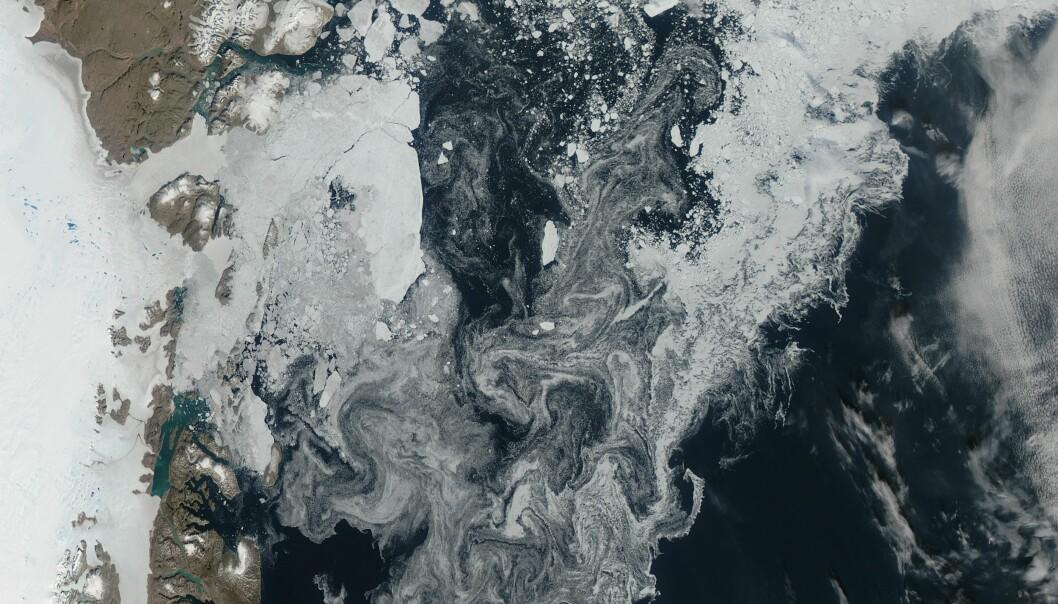Dette satellittbildet viser havisen utenfor kysten av Grønland i 2014. Virvlene på bildet er is som forflyttes av vindene og havstrømmene. (Foto: NASA Earth Observatory)