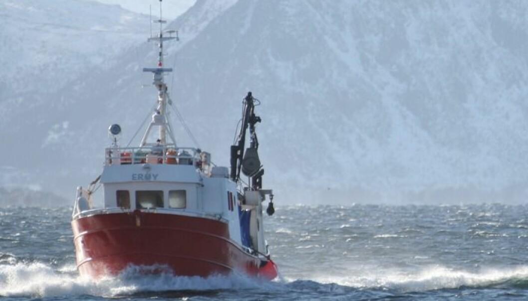 I arbeidet samles det inn informasjon om alt fra biologiske forhold langs kysten og fiskens vandringer til den historiske prisfastsettelsen på hvitfisk både i Norge, Danmark, Island og Storbritannia. (Foto: Frank Gregersen, Nofima)