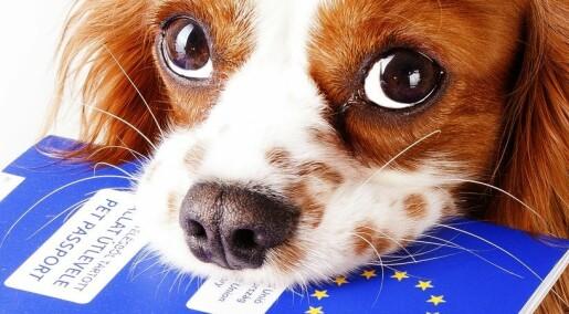 Forskere frykter hunder tar med seg farlig smitte fra utenlandsferie