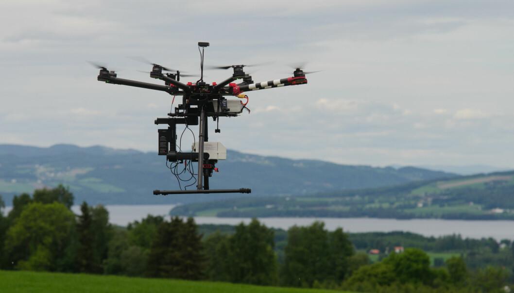 Forskere vil bruke droner til å kartlegge avlinger på rotnivå – og det før høsting. (Foto: Morten Günther)