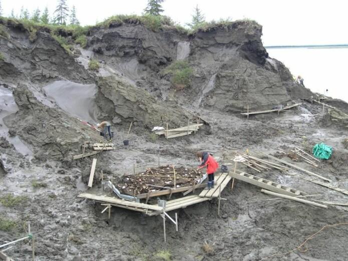 Jana-leiren graves ut. På oppsatsen ligger de samlede funnene og gjenstandene. (Foto: Vladimir Pitulko)