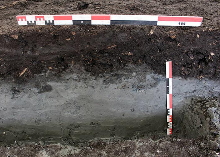 Under utgravingane av områda sør for det som i dag er Bispegata har det vore vanleg at den nedste delen av kulturlaga ligg direkte på blåleira. Foto: NIKU.