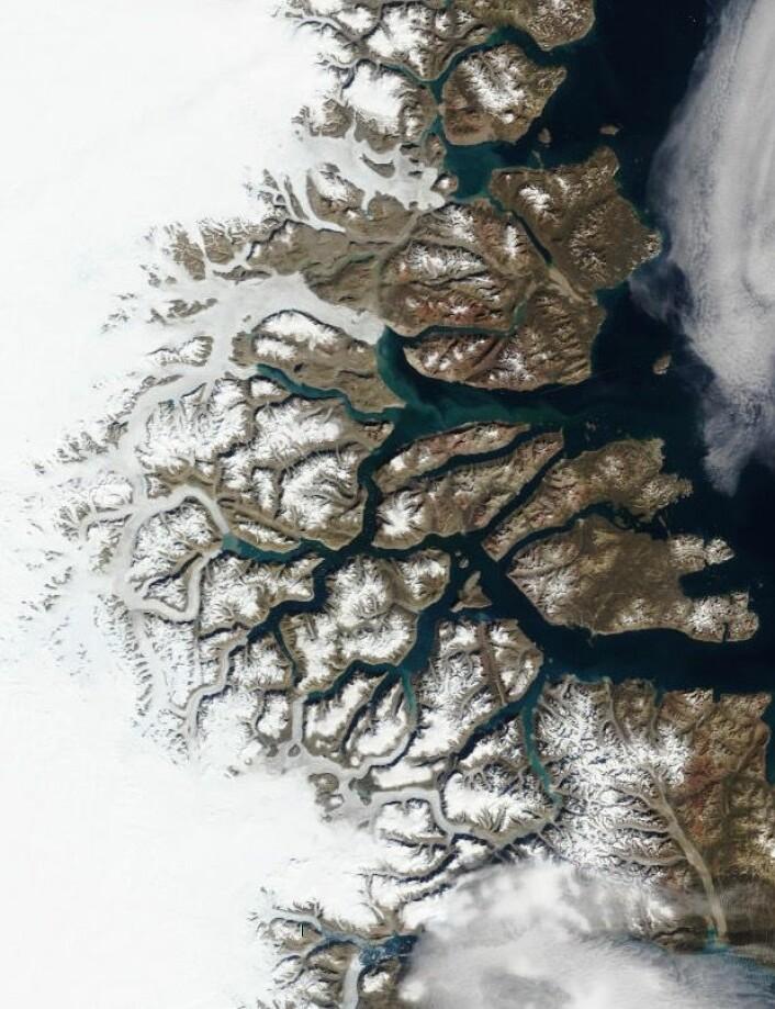 Scoresbysund på Grønlands østkyst, sett fra NASAs satellitt Terra 11 august. (Bilde: NASA Terra MODIS)