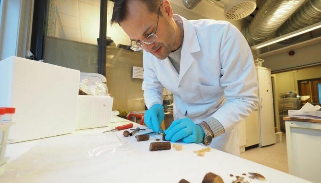 – Vi vil utnytte flere stoffer i taren, oppsummerer professor Finn Lillelund Aachmann. (Foto: Per Henning, NTNU)