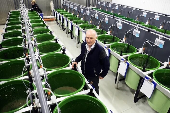 I dette anlegget på Kraknes utenfor Tromsø avler forskere på den vesle fisken for å gjøre den mer og mer sugen på lakselus. Atle Mortensen leder forskningsprosjektet for å finne de flinkeste lusespiserne. (Foto: Rune Stoltz Bertinussen, Krysspress)