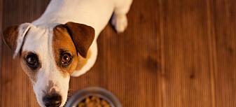 Hvorfor slipper kjæledyrene våre unna klimadebatten?