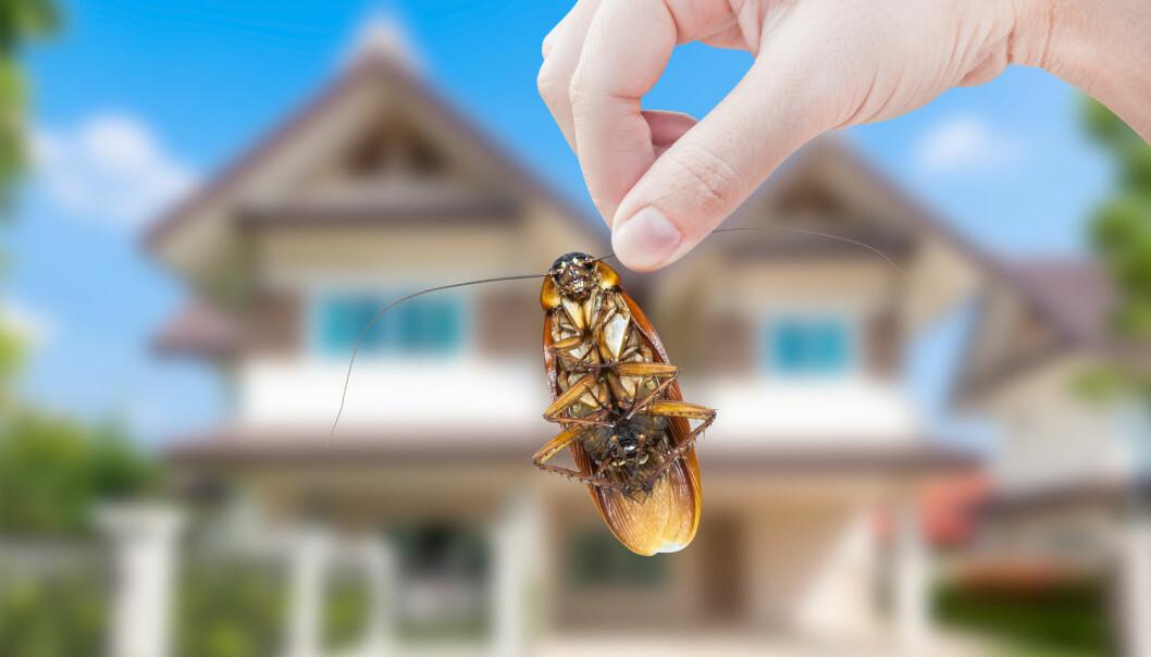 Den nye studien avdekket at et hjem i gjennomsnitt huser rundt hundre ulike insektsarter. Forskerne skriver at de fleste av disse ikke var skadedyr, og helt ufarlige. (Foto: Rawin Tanpin / Shutterstock / NTB scanpix)