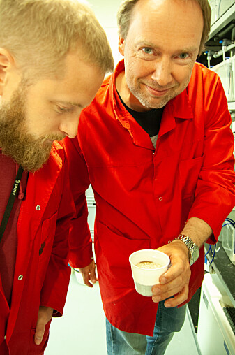 Forskere ved Sintef, Andreas Hagemann og Arne Malzahn (t.h.) har dokumentert gode vekstforhold for børstemark fôret med slam fra oppdrettsanlegg. (Foto: Håvard Egge)