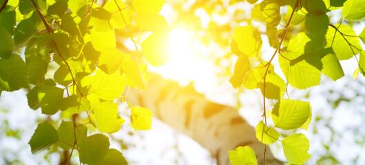 Derfor bli ikke planter solbrente