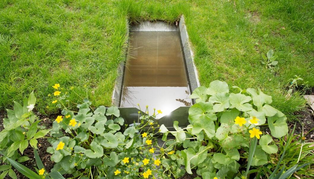 Regnbed – en nyttig oase i hagen