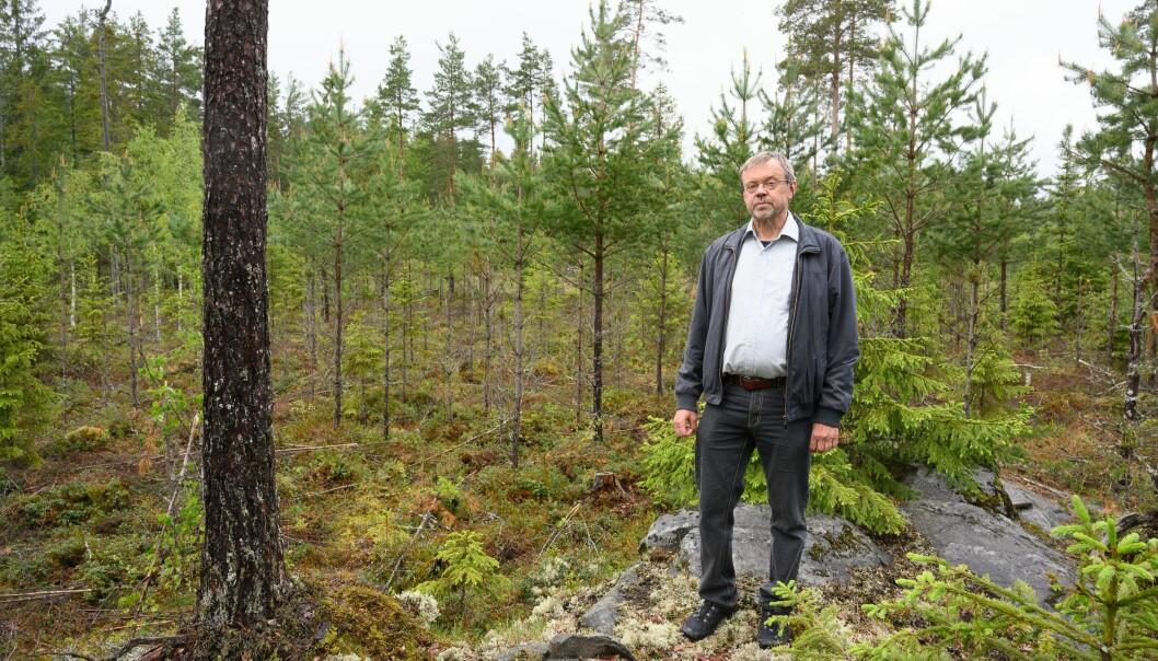 I følge seniorforsker Bjørn Økland er det urovekkende at det fortsatt importeres store volum av ulovlige trevarer som kan bringe med seg arter som gjør skade på skogen til Norge. (Foto. Erling Fløistad).